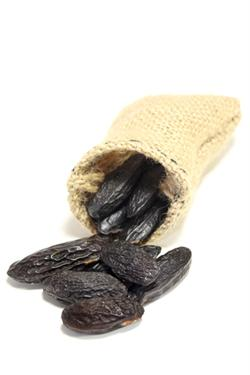 TONKA BEAN ABSOLUTE